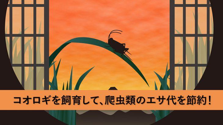 コオロギを自宅で飼育して、爬虫類のエサ代を節約する方法!