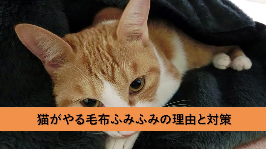 猫はなぜ、毛布ふみふみをやるのか?その理由と対策について
